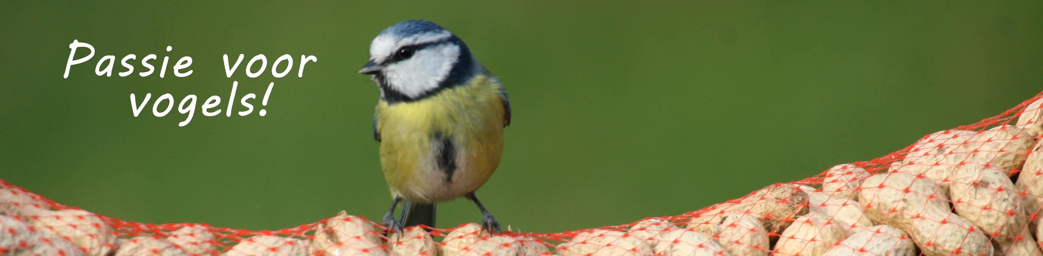 Pagina Jasper de Ruiter -passie voor vogels