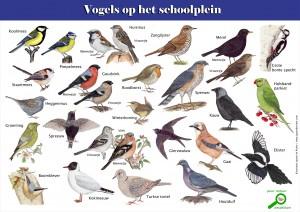 Pagina Vogels op het schoolplein1