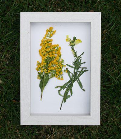 Gedroogde bloemen inlijsten